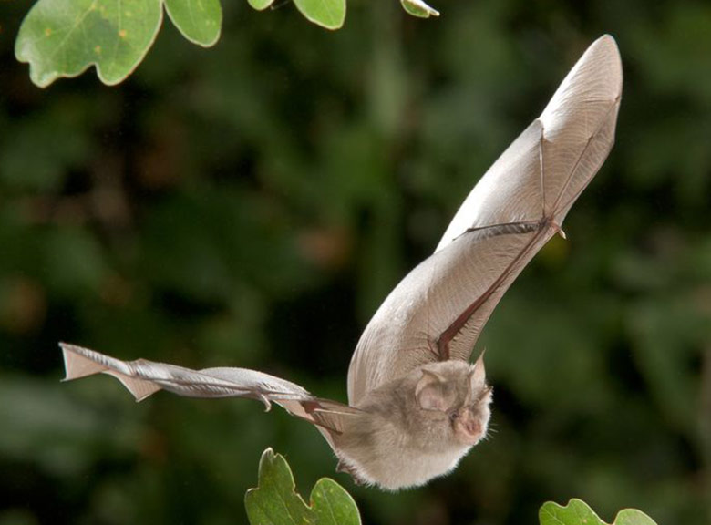 Our Irish Bats Learn About Bats