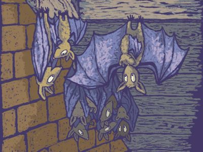 Bats roosting in a loft