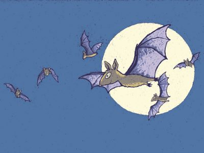 Flying bats against the moon